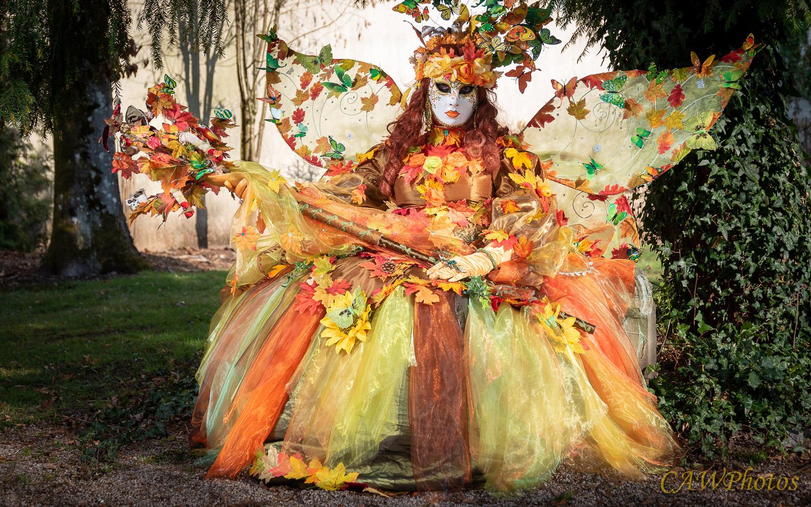Papillon d'automne - Photo C.A Warnier